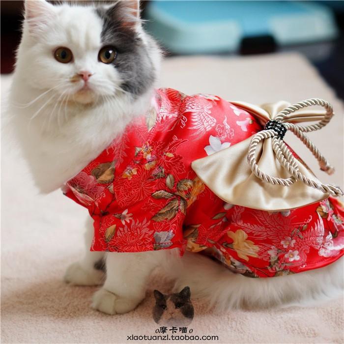 кошки в кимоно фото 11 (700x700, 423Kb)