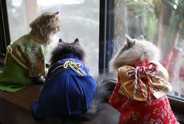 кошки в кимоно фото 14 (605x409, 175Kb)