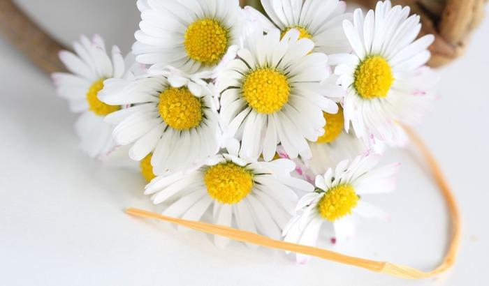 cvety-romashki-lenta-flowers (700x410, 52Kb)