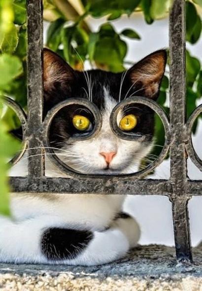 3. Учёный кот (410x591, 235Kb)