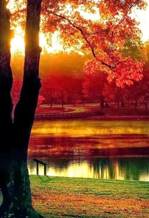 4239794_Autumn_Beauty_1_ (478x700, 133Kb)