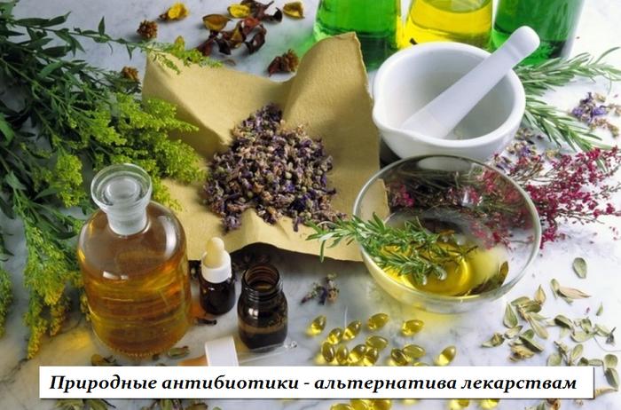 1446126612_Prirodnuye_antibiotiki__al_ternativa_lekarstvam (700x462, 547Kb)