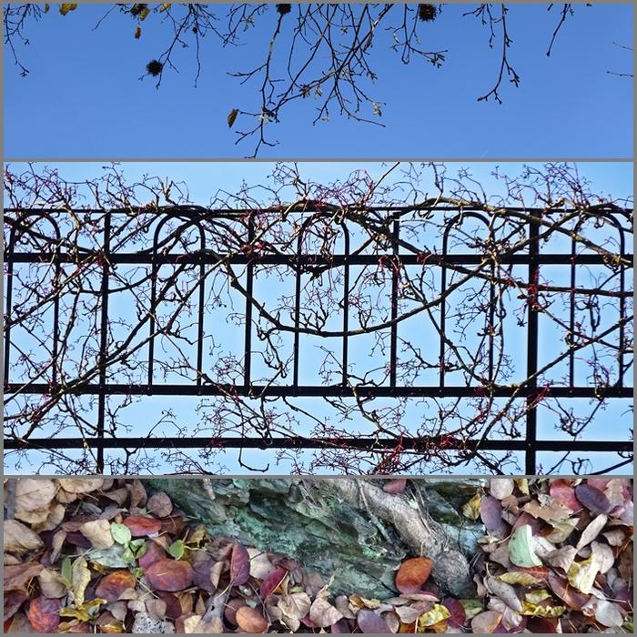 Альбом градоведа - Дюссельдорф в октябре 2015 года - природное