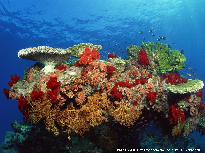 Underwater-Coral-Ocean-Sea-Background1-1024x768 (700x525, 345Kb)