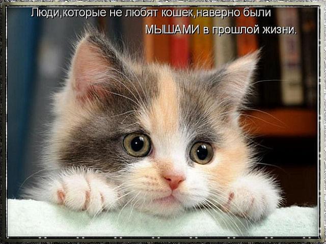 110635910_large_getImage__64_ (640x479, 211Kb)