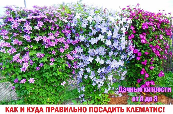 photo_1459576360 (700x462, 545Kb)