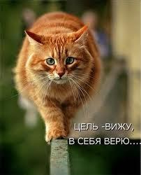 кот (202x250, 7Kb)
