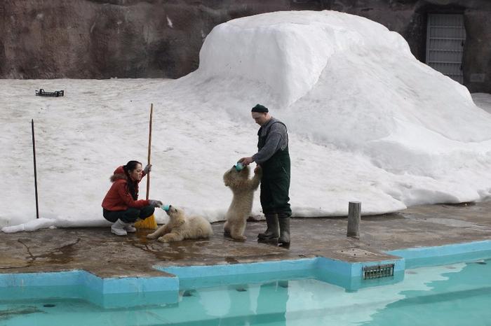 Белые медведи (700x466, 275Kb)