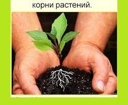 3925311_korni (254x208, 21Kb)