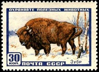 YtSU 1907 Зубр (195x141, 21Kb)