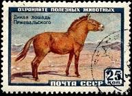 YtSU 2180 1х38 Wild Horse Przewalski Лошадь Пржевальского (193x140, 27Kb)