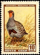 YtSU 1903 Grey Partridge ����� ��������� (141x195, 26Kb)