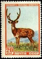 YtSU 1905 Пятнистый олень (141x197, 25Kb)