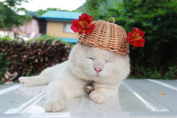 кот Shiro Neko фото 3 (600x400, 31Kb)