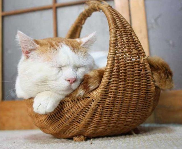 кот Shiro Neko фото 5 (640x524, 51Kb)