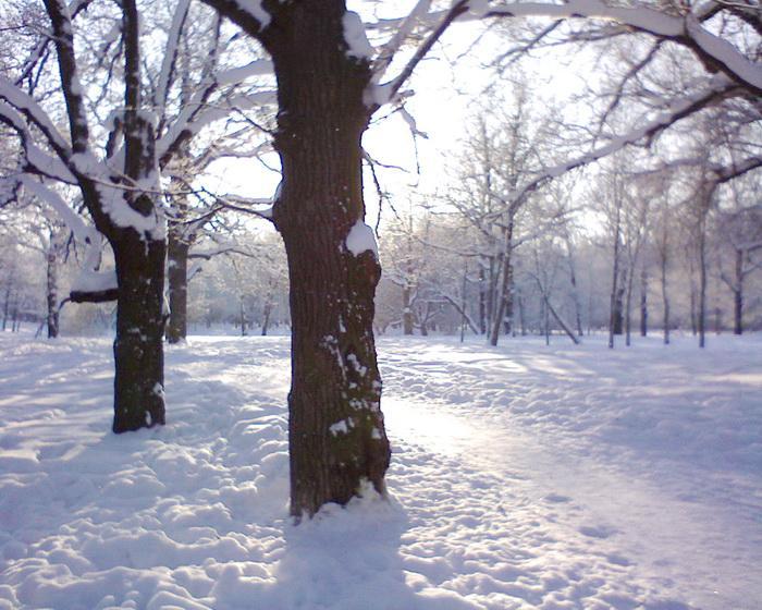 zima (700x560, 86Kb)
