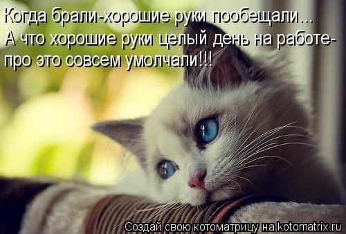 1364488662_99030410_large_kotomatritsa_3j (500x338, 35Kb)