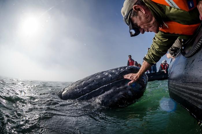 серый кит фото 4 (700x463, 240Kb)