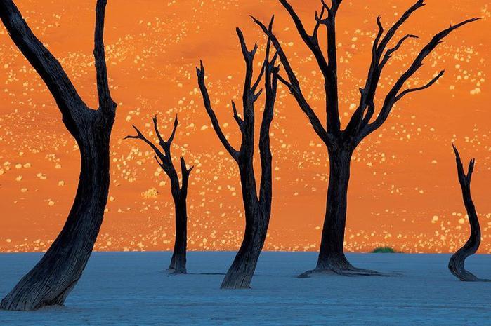 8. Верблюжья акация на фоне оранжевой дюны (700x465, 61Kb)