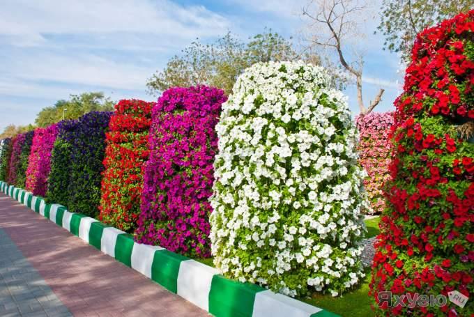 парк цветов  Al Ain Paradise фото 4 (680x455, 74Kb)