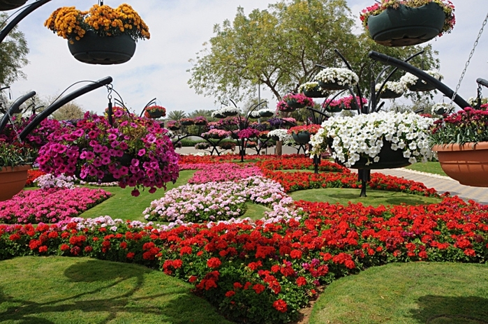 парк цветов  Al Ain Paradise фото 7 (700x464, 316Kb)