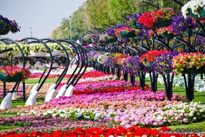 парк цветов  Al Ain Paradise фото 9 (700x468, 108Kb)