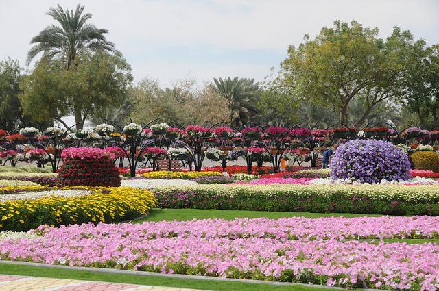 парк цветов  Al Ain Paradise фото 16 (640x425, 294Kb)