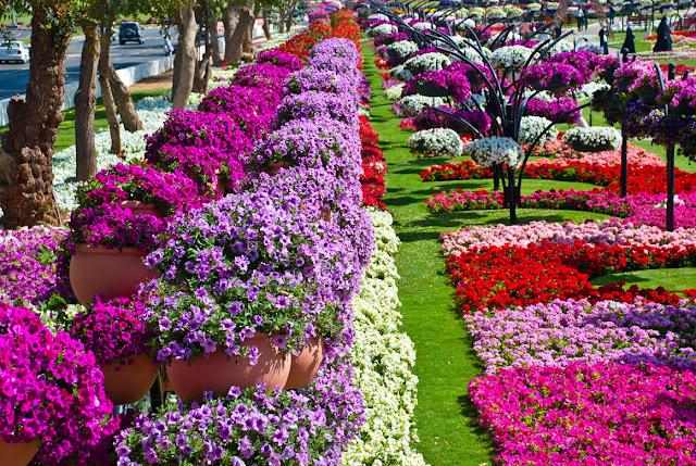 парк цветов  Al Ain Paradise фото 19 (640x429, 268Kb)