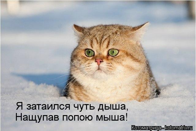 kotomatritsa_V3 (640x429, 42Kb)