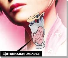 щитовиная железа (231x197, 11Kb)