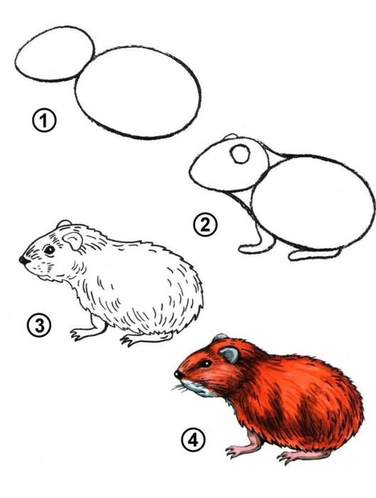 Как нарисовать разных животных ...: www.liveinternet.ru/users/4741920/post268401167