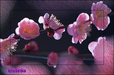 Цвет-абрикоса (450x297, 269Kb)