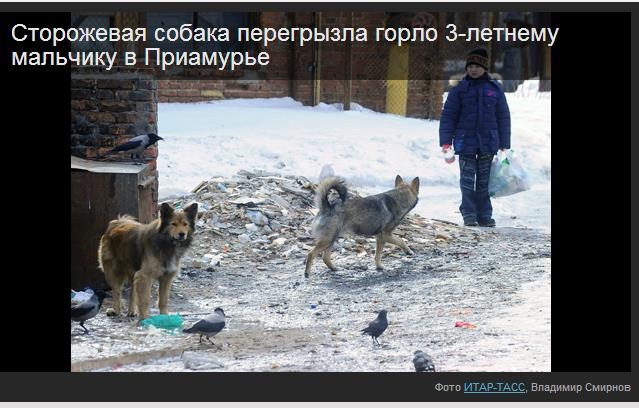 Консультация психолога собака напала на ребенка психотерапевты г.кемерово