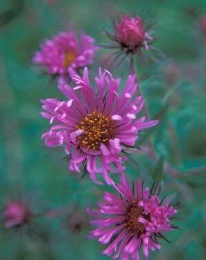 Коллекция из четырех цветников