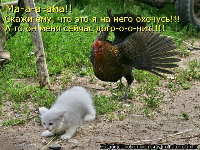 kotomatritsa_JE (640x480, 103Kb)