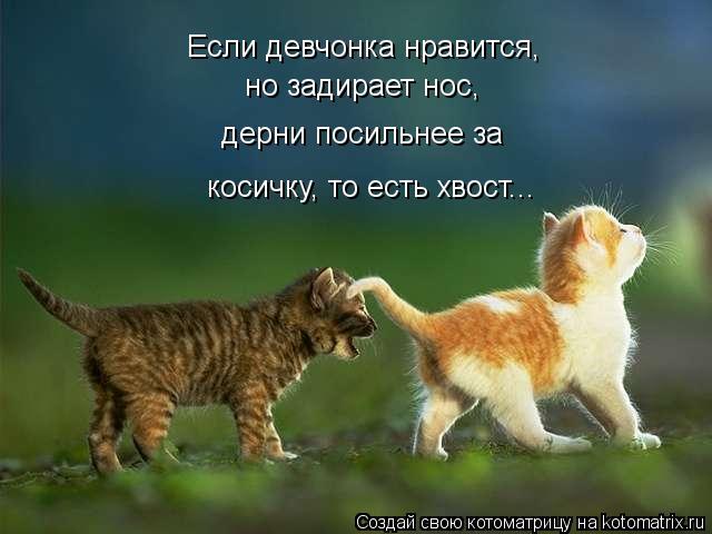 kotomatritsa_nj (640x480, 38Kb)