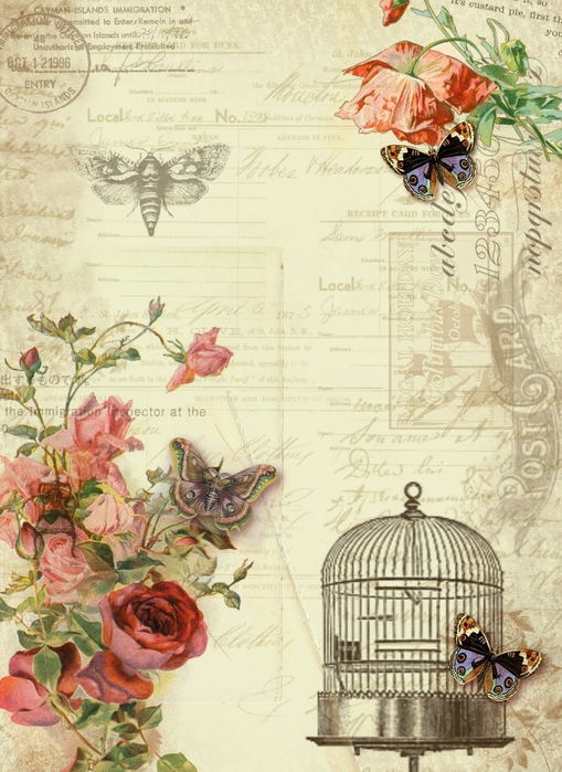 butterfly and rose (509x700, 296Kb)