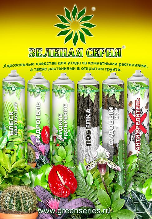Цитрус фортунелла  домашние растения