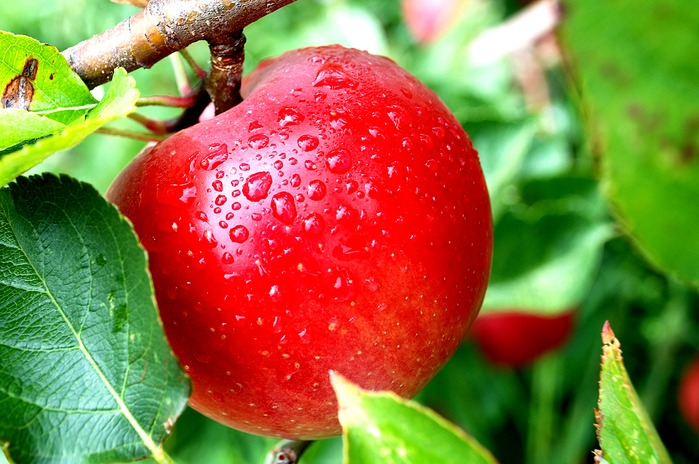 apple-red (700x464, 114Kb)
