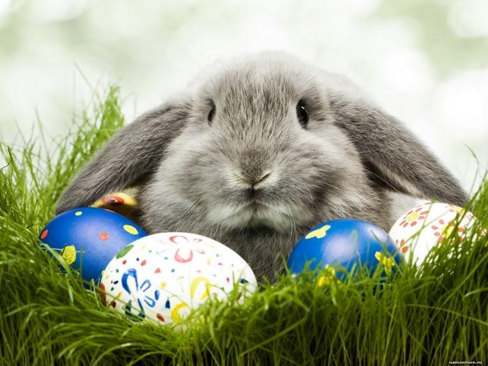 кролик (700x525, 254Kb)