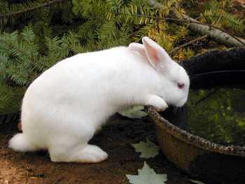 rabbit (350x263, 11Kb)
