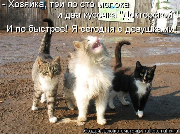 kotomatritsa__ (600x445, 66Kb)