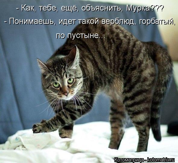 kotomatritsa_19 (590x540, 59Kb)