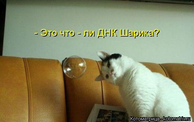 kotomatritsa_H7 (640x404, 30Kb)