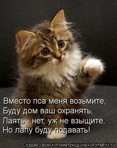 kotomatritsa_Mc (396x500, 43Kb)