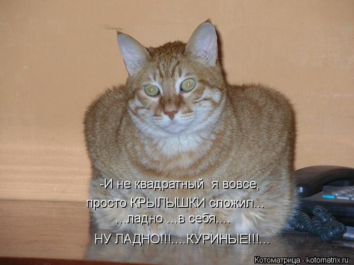 kotomatritsa_rm (700x523, 46Kb)