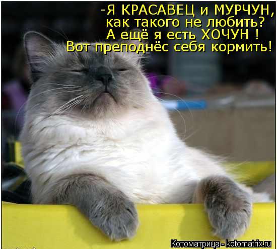 kotomatritsa_ZG (550x495, 43Kb)