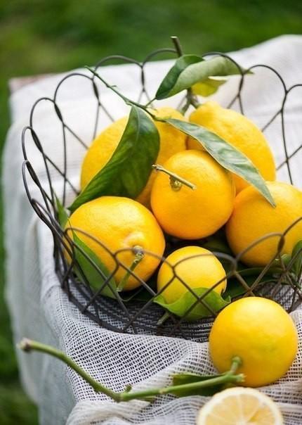 Лимон1 (430x604, 69Kb)