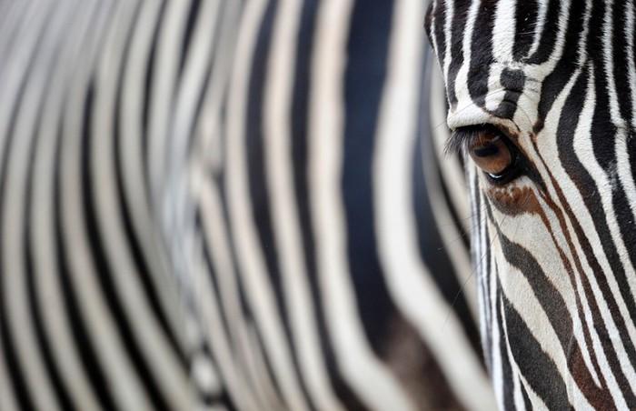 фото животных (700x452, 71Kb)