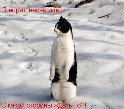 99031670_71403163_VESNAkotik_vesna_idyot (500x442, 38Kb)